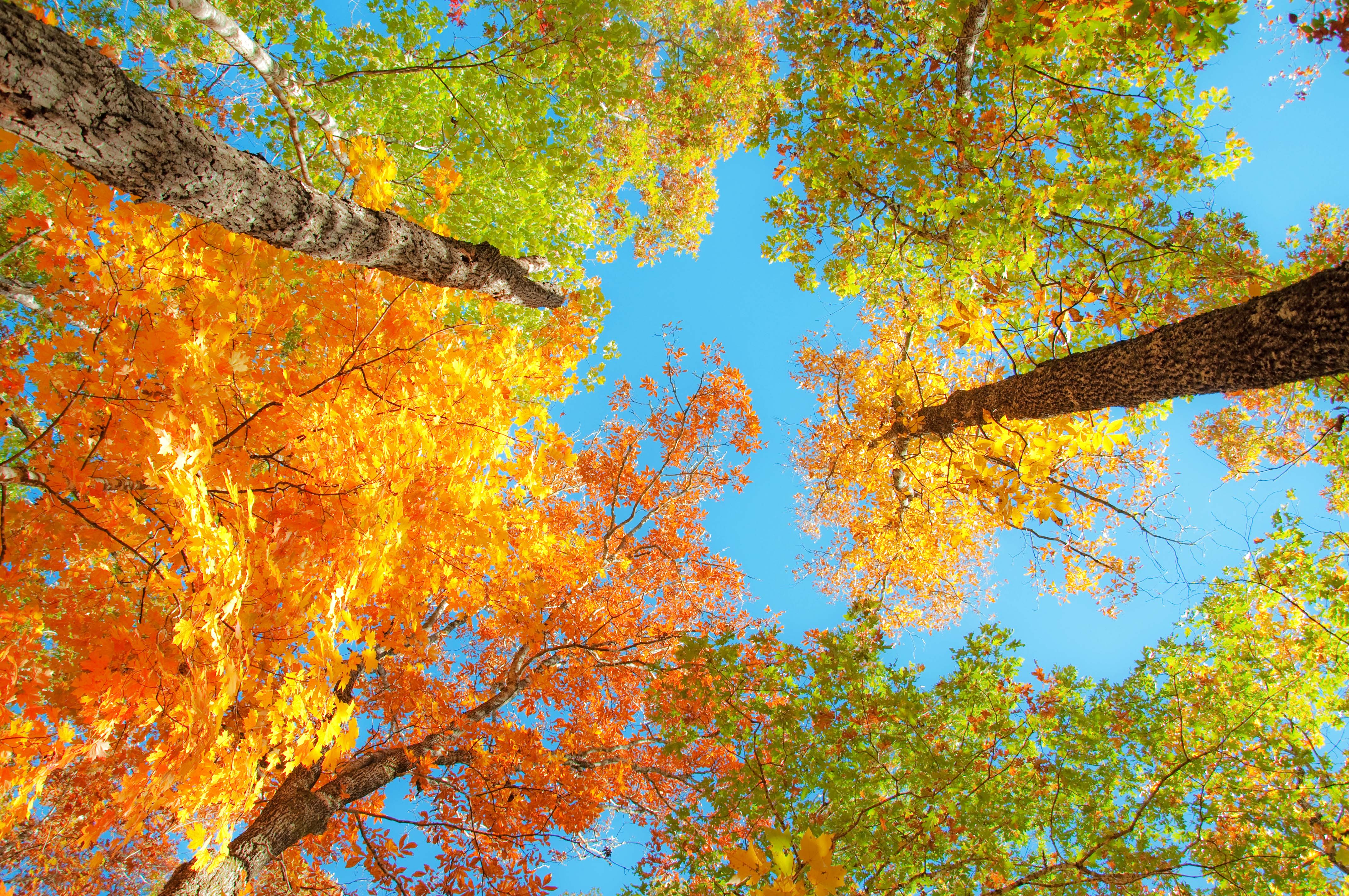 Latest Fall Foliage Report 40 29 Tv Weather Blog